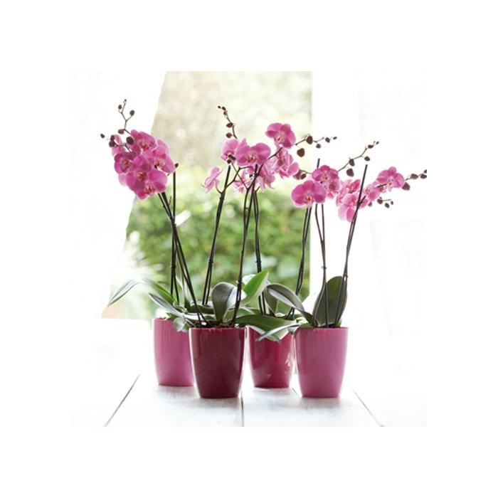 Pot pour plantes aromatiques orchidee facile by natural for Pot pour plante