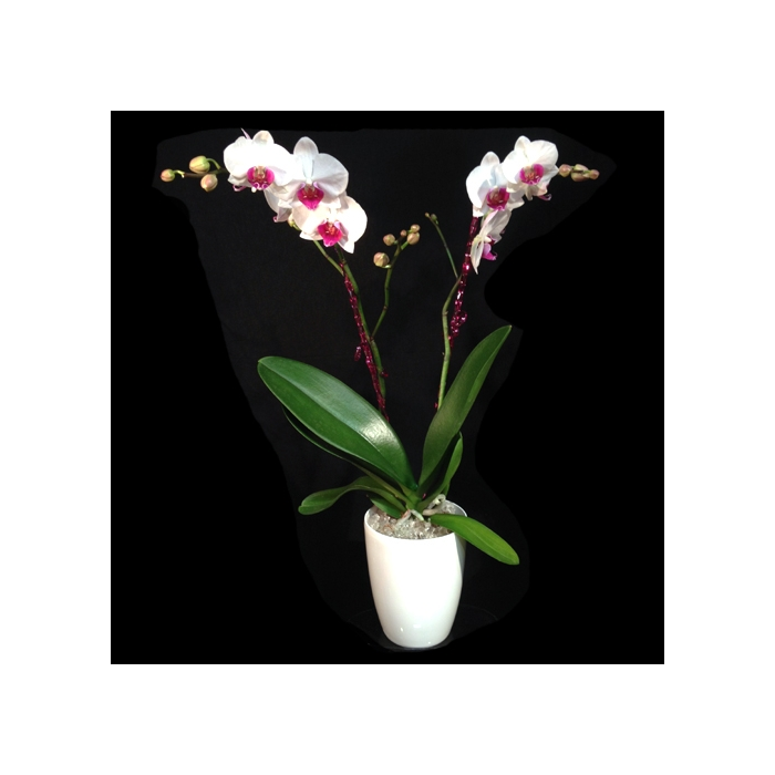 Pot pour plantes aromatiques orchidee facile by natural for Plantes aromatiques