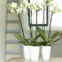 vases pots and pots cover orchidee facile by natural. Black Bedroom Furniture Sets. Home Design Ideas