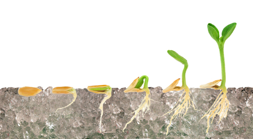 Water Retaining Plants : How to use water retention crystals grow plants